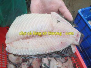 xương cá rô phi 5.1.1